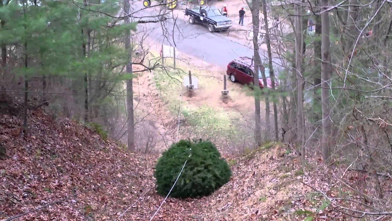 beisels christmas tree hill lehighton pa - Christmas Tree Hill