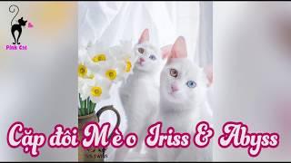 Top 10+ Mèo đẹp nhất Thế Giới