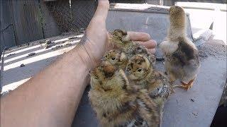 Нашёл заброшенное гнездо с яйцами и вылупилось Чудо! Eggs in the forest! Watch the eggs, bro!