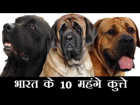 Top 10 Expensive Dogs in India