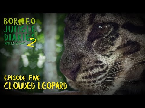 Clouded Leopard: Capturing One Of The World's Rarest Cats (S02E05) | SZtv