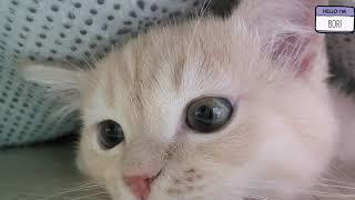 아기고양이가 카페트 밑에 들어갔어요!! The kitt…