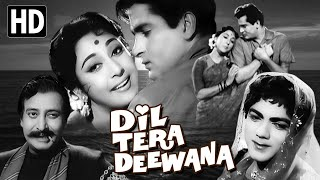 Dil Tera Deewana Full Movie | Shammi Kapoor Old Hindi Movie | Mala Sinha Old Classic Movie