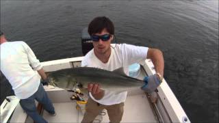 Live Lining Bunker - Bluefish - Western Long Island Sound