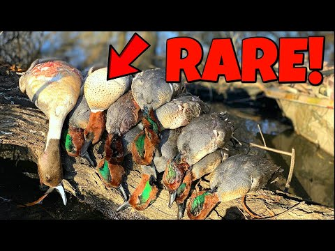 Duck Hunting - He Shot A RARE Duck!