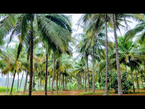 Agricultural Land for Sale in Coimbatore / 2.21 ஏக்கர் தென்னந்தோப்பு விற்பனைக்கு / 1500Sqft Godown