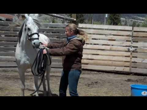 Horse Whisperer on tour Wyoming-Bitterroot Ranch Filly assessment
