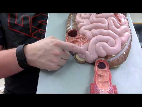 Anatomy II Episode 7: Digestive System - TEACHER T