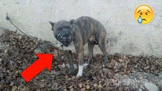 Nadie podía acercarse a este perro agresivo para liberarlo, pronto una niña hace lo impensable.