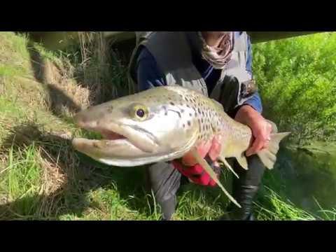 Greenstone River Fishing Trip November 2019