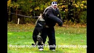 Man's Best Friend Dog Training:there's Nothing I Couldn't Train Your Dog To Do!