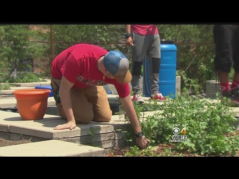 Eye On Education: Students Grow Fresh & Healthy Food For Cafeteria