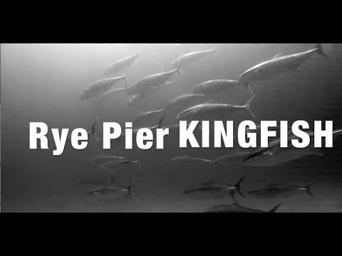 Rye Pier KINGFISH