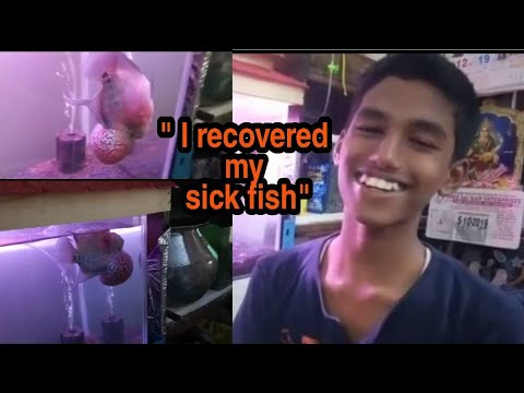 Happy Customer Update On Recovery Of His Sick Fish