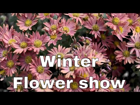 Winter Flower show at The Agri Horticultural Society Of India, Kolkata 2018