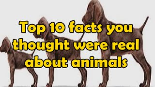 Top 10 facts you thought were real about animals