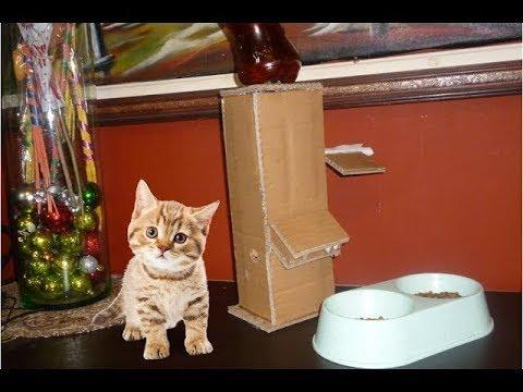 Diy Puppy Dog Food Dispenser From Cardboard Youtube