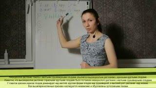 Задачи по генетике: Дигибридное скрещивание