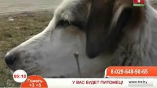 Собака Белка ждет любящего хозяина. Так же пристраиваются семеро щенков.