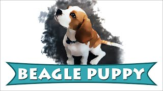 Beagle Puppy | Complete Beagle Dog Breed Facts | Petmoo