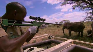 Tranquillising Wild African Elephants | This Wild Life | BBC