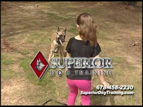 dog-training-in-atlanta-georgia