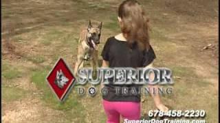 Dog Training In Atlanta Georgia