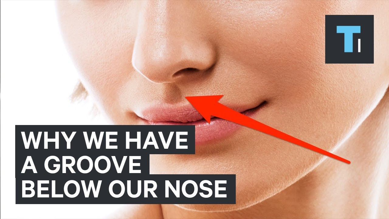 here s why we have that little groove below our nose youtube