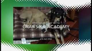 Dog Training In Macon Ga With Grays K9 Academy Trainers And Bigdeal Marketing Video Seo