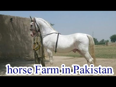 horse farm in pakistan