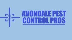 Avondale Cockroach Exterminator - Cockroach Removal Service in Avondale
