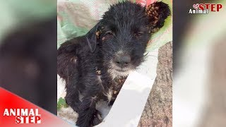Homeless Puppy Very Full Covered by Ticks, Got Amazing Rescued