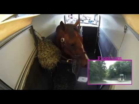 Travelling your horse | Your Horse