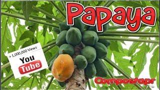 La Papaya en el Huerto