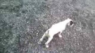ボール遊び、鴨の羽追い、猫みたいに楽しそうに遊びます。