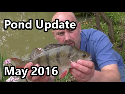 1000000 Litre Pond Update - May 2016