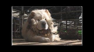 Tv동물농장 충청도 우차우 몽이 탈출이유?..가평 강아지 복실이..껌딱지 수달 햇님이