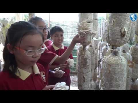 """The Asian International School_Tham quan nông trang xanh"""" Green Noen"""" cùng học sinh AHS"""