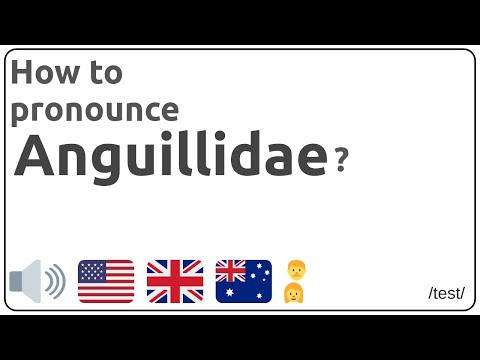 How to pronounce Anguillidae in english?