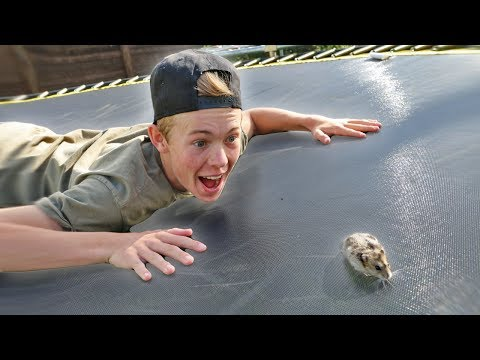 Thumbnail: TEACHING MY HAMSTER HOW TO BACKFLIP!