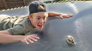TEACHING MY HAMSTER HOW TO BACKFLIP!