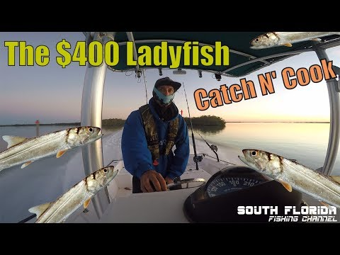 The $400 Ladyfish | Offshore Fishing Catch N Cook