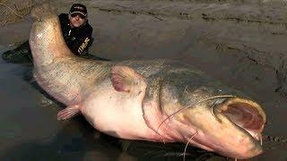 9 Gigantes Y Horribles Peces Que Los Hace Únicos