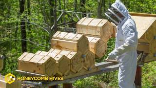 Beekeeping Reimagined  Honeycomb Hives  Fold Hives  Doug Lambrecht