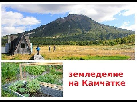 сад огород с медведями на Дальнем Востоке + Ярмарка рассады. Камчатка.