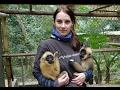 Babysitting baby gibbons