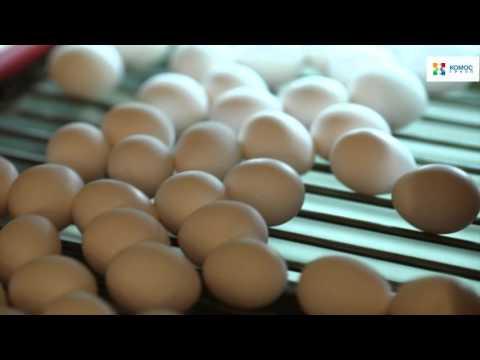 Птицефабрика «Вараксино»: традиции и качество