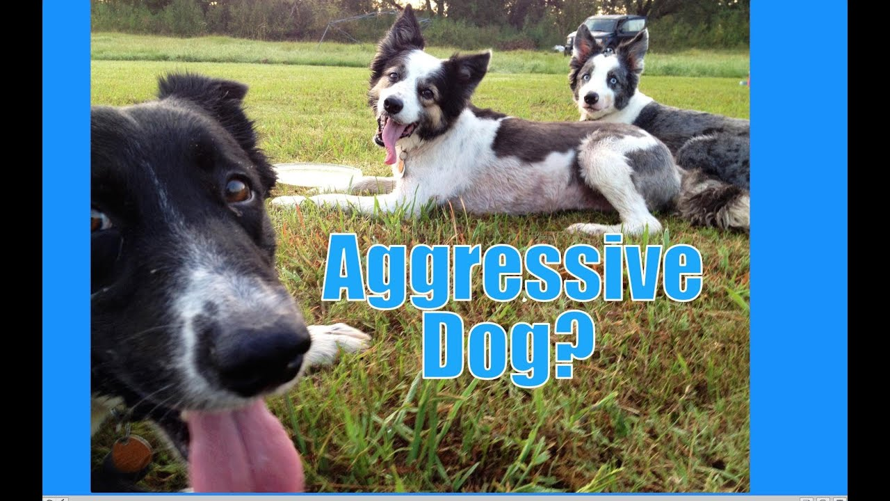 If Your Dog Is Aggressive Where Do You Start Youtube