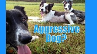 If your dog is aggressive, where do you start?