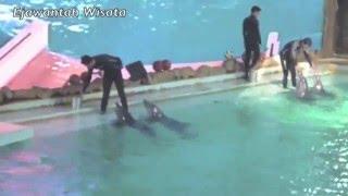 MENIKMATI OCEAN DREAM SAMUDRA ANCOL (Dholpin Show)